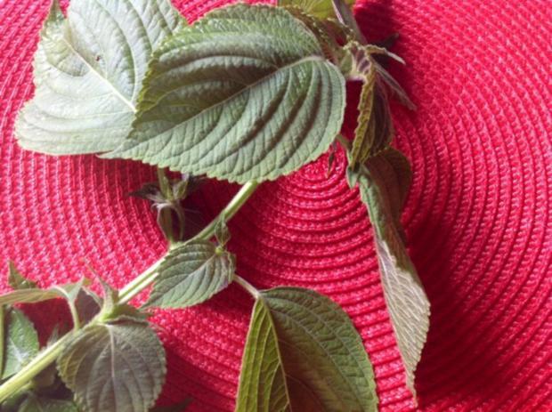 Kürbis-Tomatensalat - Rezept - Bild Nr. 3