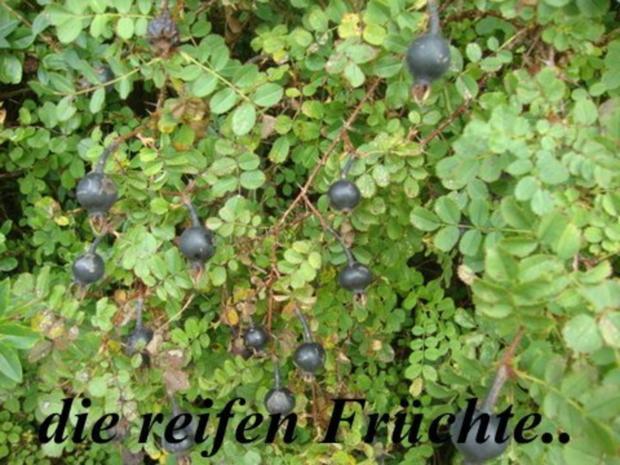 Wintergelee aus Schwarze Hagebutten mit Blutorangen, Zimt,Nelken & Sternanis - Rezept - Bild Nr. 4