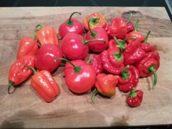 Rezept: Chili Würzpaste
