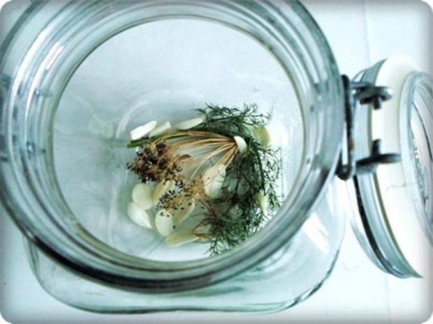 Salz-Dill Gurken nach Art des Hauses - Rezept - Bild Nr. 2