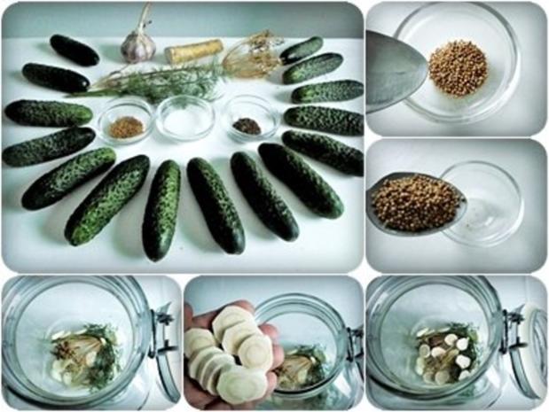Salz-Dill Gurken nach Art des Hauses - Rezept - Bild Nr. 8