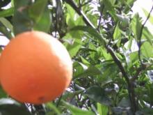 Tee mit  Orangenlikör - Rezept
