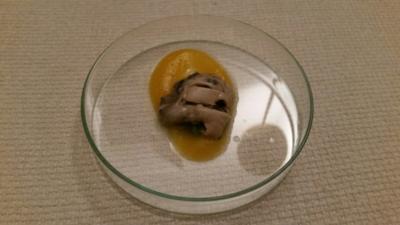 Auster | Mandarine| Dashi | Tobikko - Rezept