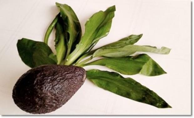 Eine fruchtige  Avocado – Bärlauch- Cremesuppe - Rezept - Bild Nr. 6
