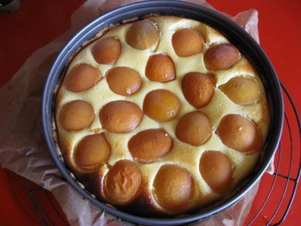 Quark Aprikosen Kuchen - Rezept - Bild Nr. 583