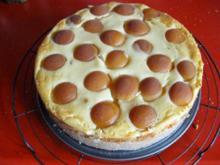 Käsekuchen mit Zuckeraprikosen - Rezept - Bild Nr. 364
