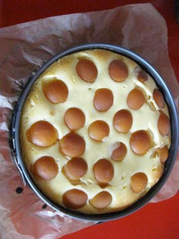 Käsekuchen mit Zuckeraprikosen - Rezept - Bild Nr. 376