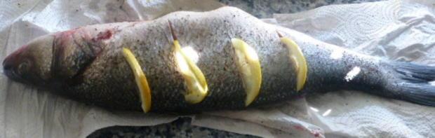 Wolfsbarsch aus dem Ofen - Rezept - Bild Nr. 570