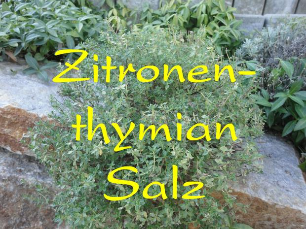 Kräutersalz vom Zitronenthymian - Rezept - Bild Nr. 713