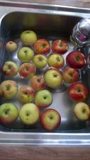 Apfelmus aus eigenen Äpfeln - Rezept - Bild Nr. 1474
