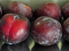Pflaumenkuchen Snack - Rezept