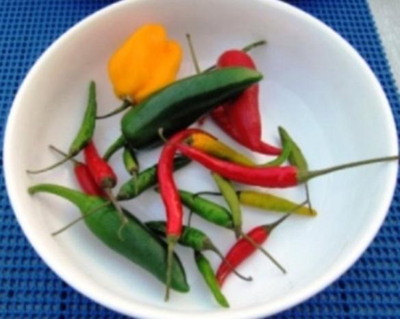 Gambas mit Hot Peppers à la Biggi - Rezept