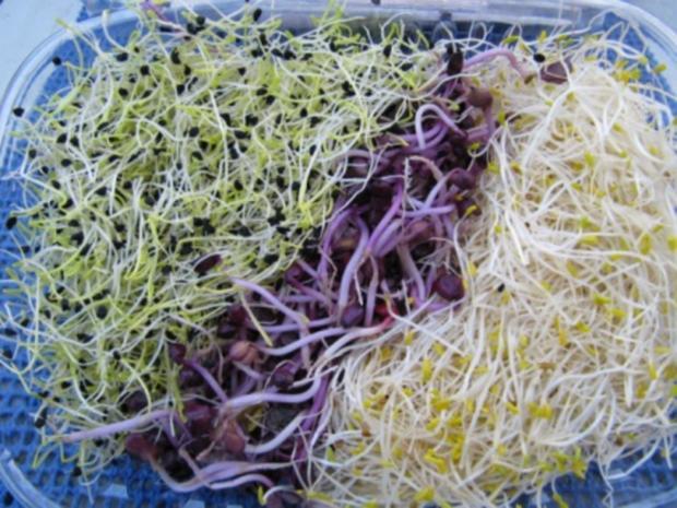Biggi`s Salate = Mediteraner Salat mit jungen Sprossen - Rezept - Bild Nr. 4