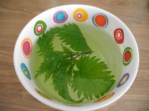 Frischer Brennessel - Tee - Rezept