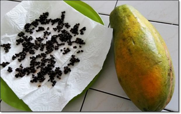 Papayapfeffer  selbst  herstellen - Rezept - Bild Nr. 47