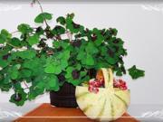 Cantaloupe Melone-Körbchen mit Obst gefüllt - Rezept - Bild Nr. 227