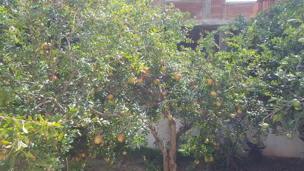 Rafika's  Granadapfel-Apfel-Bananen-Wunder - Rezept - Bild Nr. 360