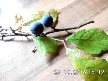 schlehenlikör - Rezept