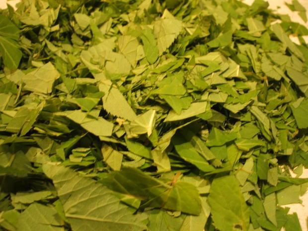 Gewürzmischungen: Giersch-Pesto - Rezept - Bild Nr. 2950