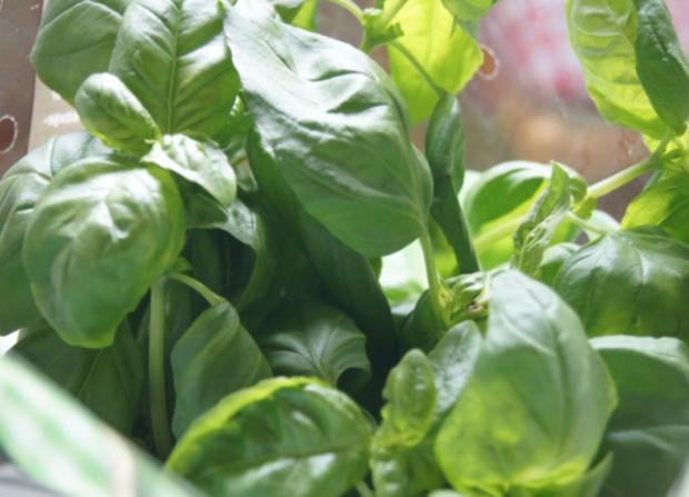 Tomaten-Minimozzarella-Salat - Rezept - Bild Nr. 2990