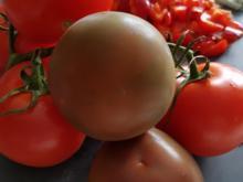 Pilz-Tomaten-Paprika Sosse - Rezept - Bild Nr. 3461