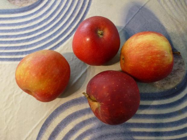Gedeckter Apfelkuchen Nach meiner Art - Rezept - Bild Nr. 4235