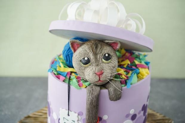 Sally Backt Katze In Der Geschenkbox Rezept Kochbar De