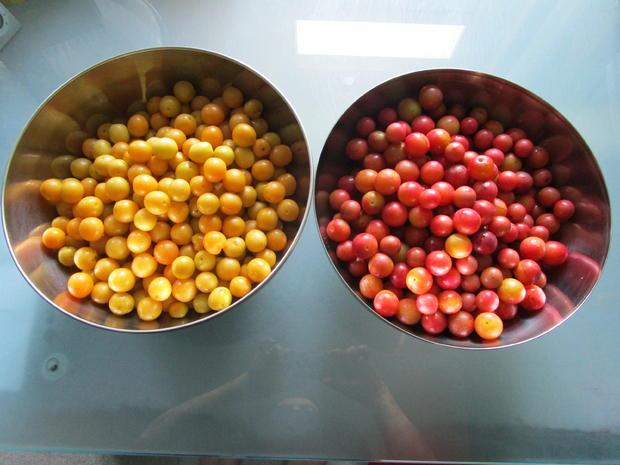 Kirschpflaumensaft mit Brombeeren - Rezept - Bild Nr. 6166
