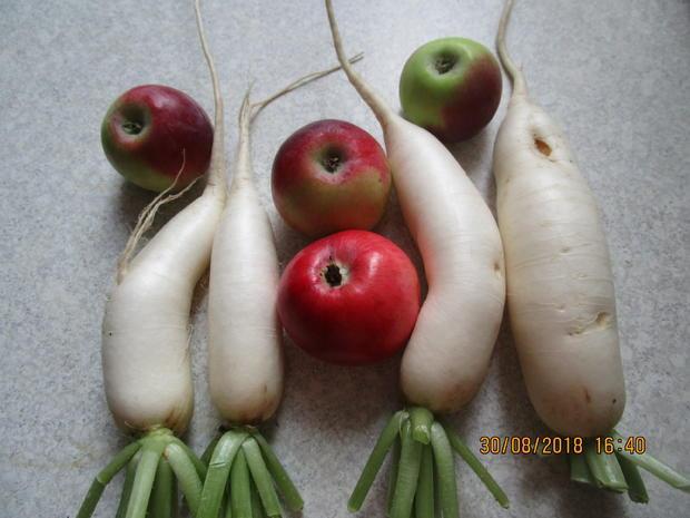 salat: rettich und äpfel aus dem garten müssen weg - Rezept - Bild Nr. 6242