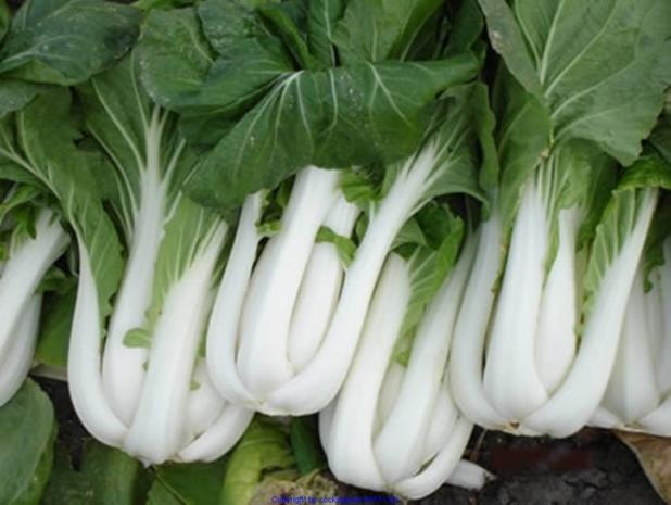 Frischer Salat mit Scampi`s (lauwarm) - Rezept - Bild Nr. 7857