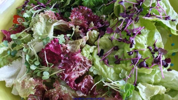 Biggi`s Salate = Wasabi-Rucula Salat mit Avocado Melone und Passionsfrucht - Rezept - Bild Nr. 8471