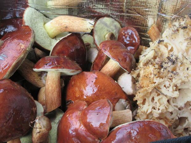 Pilze: Panierte Maronenröhrlingsköpfe - Rezept - Bild Nr. 8639