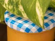 Quitten-Honig-Mus mit dem Thermomix - Rezept - Bild Nr. 2