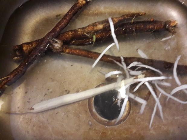 Schwarzwurzel Ragout - Rezept - Bild Nr. 3