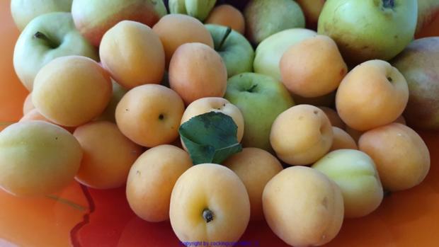 Aprikosencreme (Marillencreme) könnte man auch Fruchtaufstrich nennen - Rezept - Bild Nr. 3