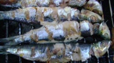 Grillen: Sardinen vom Holzkohlen Grill - Rezept