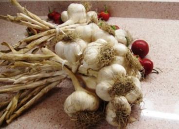 Antipasto aglio - Rezept