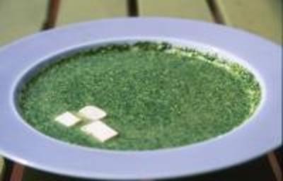 Wildkräuter: Brennesselcremesuppe mit Tofu - Rezept