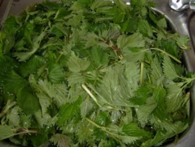 Gemüse: Brennessel Gemüse/Brennessel Spinat - Rezept