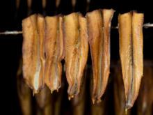 So werden Forellen geräuchert - Tip