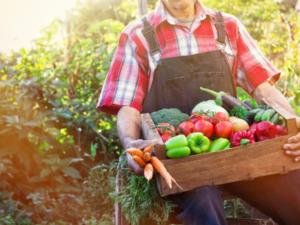Tomatenkrankheiten vermeiden - Tip