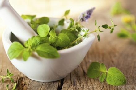 Blühende Kräuter und Salate sind essbar - Tip