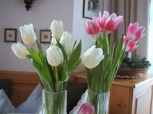 Tulpen  - Tip