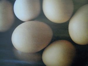 wie erkenne ich ob Eier noch frisch sind... - Tip