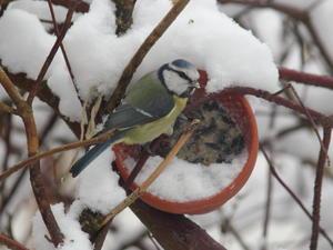 Vogelfutterglocken - Tip