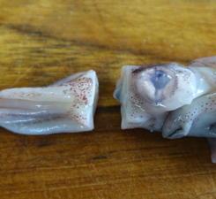 Frische Tintenfische zubereiten - Tip