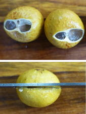 Frische Longan- oder Lengkeng-Früchte schälen und verwenden - Tip