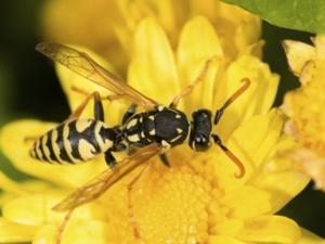 Ungebetene Besucher beim Essen: Wespen - Tip