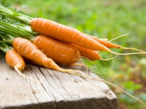 Karotten lagern – vom Kühlschrank bis zur Erdmiete - Tip
