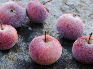 Äpfel einfrieren – gewusst wie - Tip